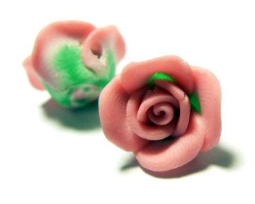 Rose_rose_bicolore